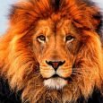 Tema Leão