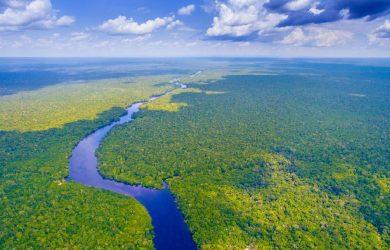 Tema Floresta Amazônica